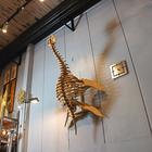 plesiosaurus8.JPG