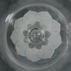 rosenthal_lotus-4.jpg